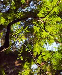Proyectos Forestales
