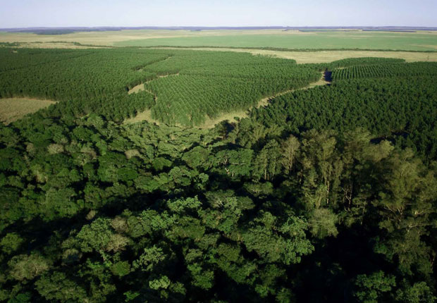 Sustainable management of forest plantations